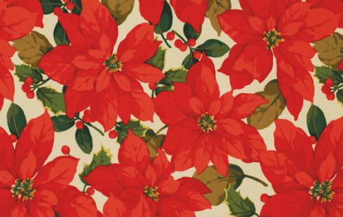 ROWAN POINSETTIA & HOLLY POINSETTIA PWMN074 NATUR